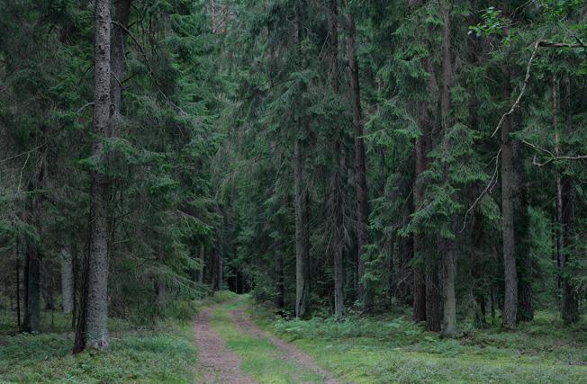 Iš ciklo Miškas. 2. 2011